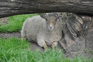 We All Like Sheep...
